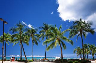 hnl_beach06w472_c.jpg